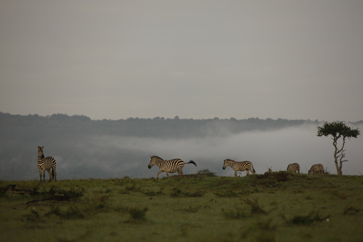 masai_mara_kuoni_lizzy_courage_reel_3