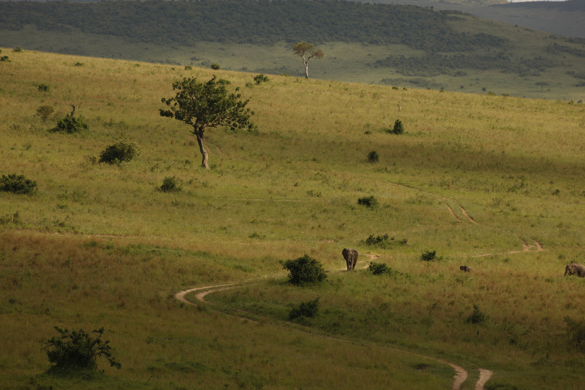 masai_mara_kuoni_lizzy_courage_reel_5